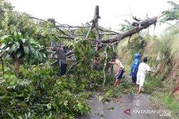 Hujan deras di Kota Bogor memicu 12 bencana dalam sehari