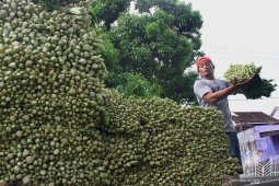 Produksi sayuran melimpah membuka peluang ekspor