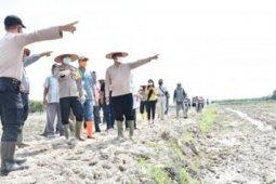 Lahan 20 hektare sawah baru di Serdang Bedagai siap tanam  padi