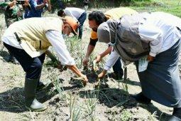 Pemkab Sergai maksimalkan pembangunan sektor pangan