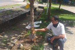 Pohon di kawasan Muarabulian Basket Indoor dimatikan dengan minyak tanah