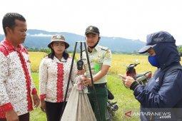 Polbangtan Medan ikut panen raya padi di Toba, hasilnya 8,1 ton per hektare