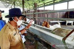 Stok ternak Kaltim lebih dari 2.700 ekor aman hingga Idul Adha