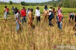 Pemprov Bengkulu salurkan bantuan benih untuk 20 ribu hektare