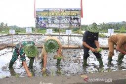 Pangdam Udayana-Bupati Gianyar tanam padi untuk ketahanan pangan