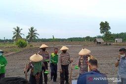 Polbangtan Medan - Polres Bengkalis tanam kedelai bersama petani