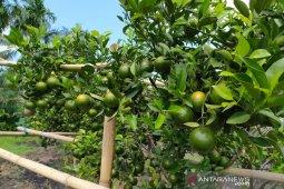 Agrowisata makin diminati warga Bengkulu