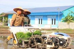 Wali Kota Binjai tanam padi sistim Jarwo