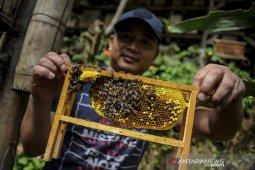 Panen madu di Maribaya Lembang