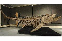 Fosil ikan predator raksasa 70 juta tahun ditemukan di Patagonia