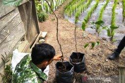Seluruh OPD Tapsel berpartisipasi mengisi KRSTS dengan tumbuhan endemik