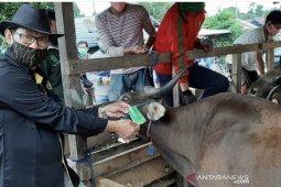 Diprediksi penjualan hewan kurban di Kaltim  menurun dampak  dari COVID-19