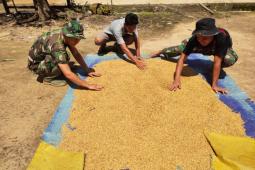 Anggota Satgas TMMD bantu warga jemur padi