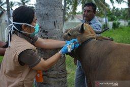Dinas Peternakan Provinsi Gorontalo periksa kesehatan hewan kurban