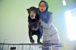 BKSDA terima penyerahan beruang madu betina dari warga