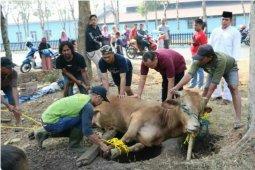 Penyembelihan hewan kurban bakal terapkan protokol kesehatan