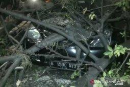 Tiga pengendara terluka tertimpa pohon tumbang di Jakarta