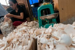 Resepsi pernikahan semarak, perajin jamur  kewalahan layani permintaan