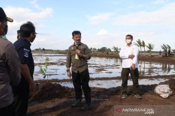 Antisipasi gagal panen, petani diminta manfaatkan asuransi pertanian