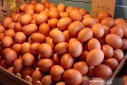 Harga telur ayam ras di Ambon normal dan bervariasi