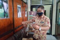 Warga Danau Sipin serahkan seekor kukang kepada petugas BKSDA