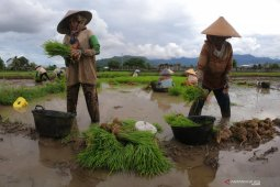 Daily wage of farm workers up 0.17% in March