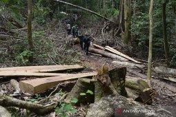 Pembalakan liar di Aceh Besar