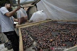 Produksi kopi wine di Garut