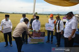 Presiden bantu sapi untuk petani di Aceh