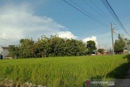 Kemarau 2020 tidak pengaruhi kegiatan pertanian di Bantul