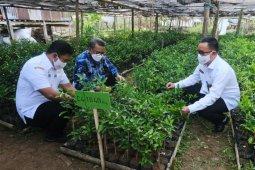 Gubernur Sulsel imbau petani menanam tanaman bernilai ekonomi tinggi