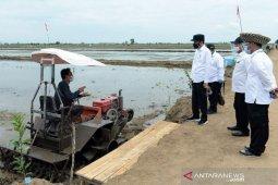 Tingkatkan produksi padi, Kementan gunakan varietas unggul di food estate