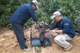 BKSDA Jambi lepas liarkan 17 ekor satwa dilindungi ke habitatnya