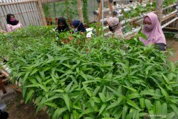 Borosnya pangan Indonesia dan anjloknya daya saing bangsa