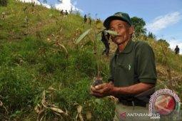 Pemprov Sulteng  ajak masyarakat proaktif tanam pohon cegah banjir