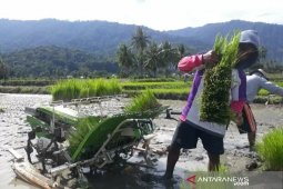 Upaya petani Sigi  keluar dari kesulitan air
