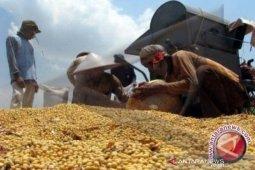 Sulteng masih tergantung pada komoditi kedele impor