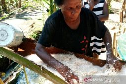 Preserving the sustainability of Papuan staple sago