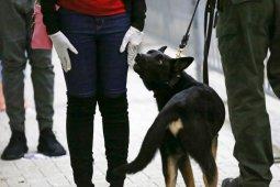 Ahli virologi tidak sarankan manfaatkan anjing pelacak deteksi COVID-19