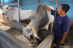 Untad-Pemkab Parimo kerja sama buka sekolah peternakan rakyat