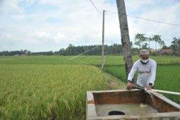 Sumatera Selatan percepat  musim tanam padi periode kedua