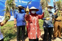 Wagub Sulbar : Pemupukan tepat guna tingkatkan produksi padi Gapoktan Sipatua Polewali  Mandar
