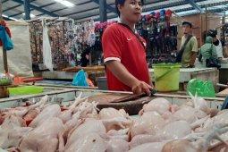 Harga daging ayam di Tanjungpinang stabil