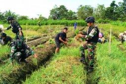 Satgas TNI bantu warga panen bawang merah di wilayah perbatasan RI-PNG
