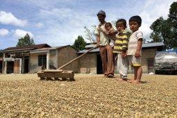 Keeping the Sumatran coffee business fragrant amid COVID-19 pandemic