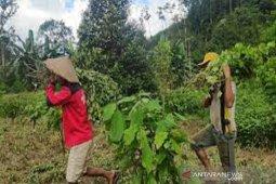 Petani di Konawe Selatan keluhkan penurunan harga nilam