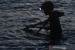Nelayan Udang Kecil di Palu