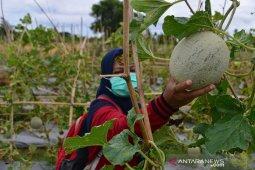 Penerapan Prokes di Agrowisata thumbnail