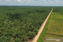Petani swadaya kuasai 6,72 juta hektare lahan sawit Indonesia thumbnail