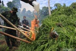 Pemusnahan dua hektare ladang ganja di Aceh